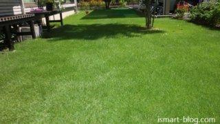 【Web内覧会・第48回】 それでもあなたは芝生を植えますか?一年経った我が家の芝生