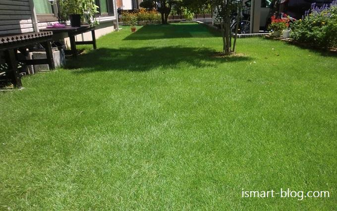 【Web内覧会・第48回】それでもあなたは芝生を植えますか?一年経った我が家の芝生